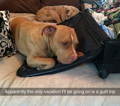 This dog has the guilt trip down to a tee! Does your dog act differently when you're preparing to travel?