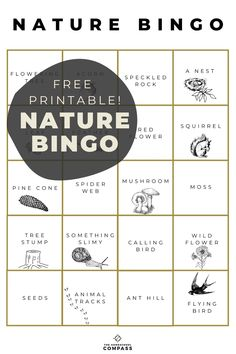 A fun game that will have children exploring outdoors on the hunt for a list of spring and nature inspired items! Simply download and print! Homeschool Curriculum, Homeschooling, Something Wild, Nature Words, Flower Bird, Spring Nature, Spring Sign, Nature Study, A Classroom