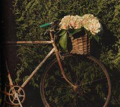 Encontrarás una fabulosa galería de fotos de bicicletas con diferentes estilos como para animarse y adquirirla hoy mismo. Son bellas, prácticas y ecológicas