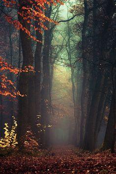 Forrest Mist.