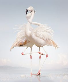 Animals Photography by Simen Johan