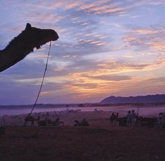 Pushka Camel Fair: 'Rajasthan's most famous festival is less and less about the eponymous camels and more about a rollickin' good time, though the dunes outside of Pushkar are still a sight (and a smell) to behold when the cameleers come to town.' Read more here: www.lonelyplanet....