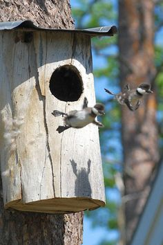 """A jump straight out of life. With the image of the """"two knipungarna"""" leaving the nest by Karin Thorell"""