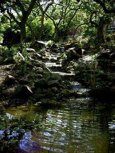 Santa Barbara Garden Pond
