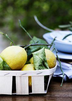 I've Always Wanted a Lemon Tree