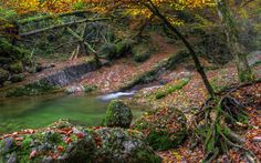 Autumn water stones moss trees river lake leaves g wallpaper background Windows Wallpaper, Fall Wallpaper, Wallpaper Backgrounds, Desktop Photos, Autumn Forest, Free Pictures, Landscape Photography, Scenery, River