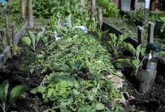 Secrete ale cultivarii castravetilor in gradina bio - magazinul de acasă Ale, Vegetables, Nature, Gardening, Plant, Naturaleza, Ale Beer, Lawn And Garden, Vegetable Recipes