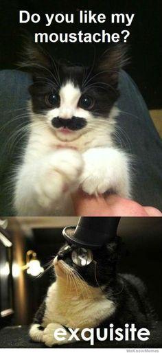 Humor animal, animal memes, funny animals, cute animals with fu Humor Animal, Animal Memes, Baby Animals, Funny Animals, Cute Animals, Crazy Cat Lady, Crazy Cats, I Love Cats, Cute Cats