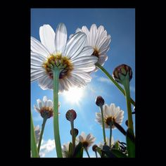 flowers – by © peter gartmann + sabina roth – art photography – art book – www.petergartmann.com – www.sabinaroth.com – switzerland – collection www.susanneminder.ch #petergartmann #susanneminder #sabinaroth #guggenheim #centrepompidou #tatemodern #tate #moma #mumok #museumludwig #whitneymuseum #sfmoma #museumofmodernart #stedelijkmuseum #massmoca #palazzograssi #artbasel #artbaselmiami #fondationbeyeler #kunsthauszürich #foto_museum #zeitgenössischekunst #contemporaryartwork #photoartwork Moma, Museum Ludwig, Art Basel, Centre Pompidou, Switzerland, Dandelion, Art Photography, Flowers, Plants