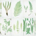 Resources for FREE Botanical Prints - Botanicals are a popular home decor trend. Download this resource with links to over 150 FREE botanical printables to use in gallery walls or crafts.