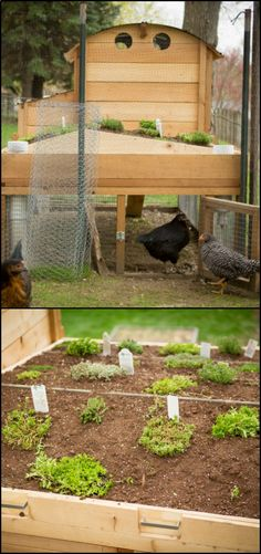 How to Build a Chicken Coop With a Green Roof It seems like theres always enough space for all the things we want to grow in our backyard after all! Even if you already have chickens dominating a large part of your yard, you can still add more greens in your garden. The roof of your chicken coop is a nice extra spot for growing plants.