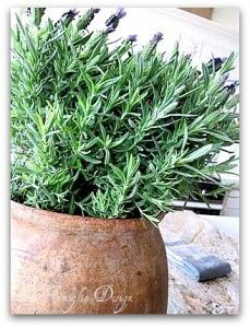 Keep lavender in a large antique french pot. Your space will smell amazing, and you will feel calm and less-stressed.