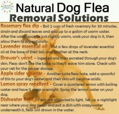 Flea Prevention Dog Treats That Work Like A Charm | The WHOot
