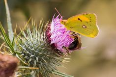 https://flic.kr/p/synU3E | Flora y fauna