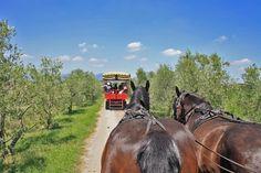 Gita in carrozza nella Tenuta Torre a Cenaia - Hors carriage tour in Torre a Cenaia estate