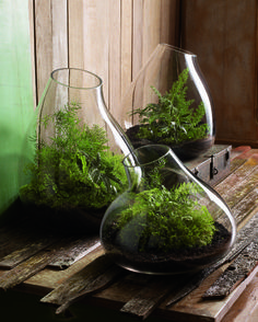 Roost's recycled glass terrariums
