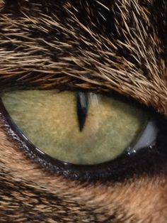 A photo of my cat's eye