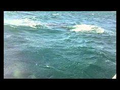 Ballenas en Las Grutas