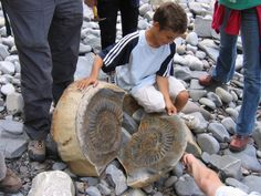 A giant ammonite discovered at Quantoxhead