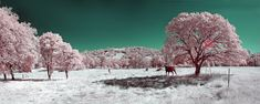 Infrared photography. Taken with a Nikon D50 camera and Hoya R72. Panorama..