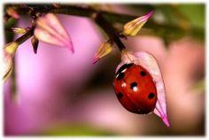 LadyBug! by lillian