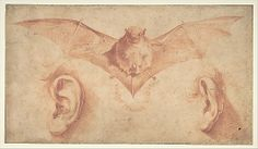Studies of Two Ears and of a Bat. Below, the motto: FULGET SEMPER VIRTUS (Virtue Shines Forever) Jusepe de Ribera (called Lo Spagnoletto) (Spanish, Játiva 1591–1652 Naples) Date: 1591–1652 Medium: Red chalk and brush and red wash on beige paper. Composition outlined on all borders with ruled lines in black chalk Dimensions: 6-1/4 x 11 in. (15.9 x 27.9 cm)