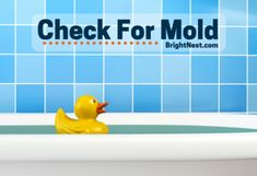 It is time that you became educated on what causes mold growth in your home and where it tends to grow. Be proactive about ridding your home of mold! Bathroom Mold Remover, Bathroom Caulk, Mold In Bathroom, Bathroom Cleaning, Small Bathroom, Molding Ceiling, Diy Molding, How To Kill Mold, Sock Smelling