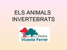 ELS ANIMALS INVERTEBRATS