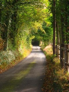 Tree Tunnel, Shoreham, Kent, England photo via shays I drove down so many of these wonderful roads on my trip