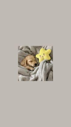 Cute Puppy Wallpaper, Dog Wallpaper, Locked Wallpaper, Animal Wallpaper, Cartoon Wallpaper Iphone, Disney Phone Wallpaper, Cute Baby Cats, Cute Little Animals, Cute Animal Memes