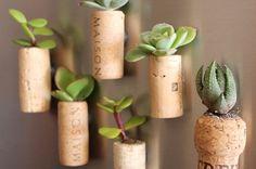 cork_planters mount onto scrap wood rather than magnets. Fridge get no sun.