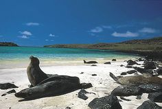 Galapagos Island, Ecuador