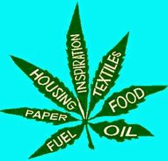 Activist Post: Maine Bill Would Legalize Full-Scale Industrial Hemp Farming #news