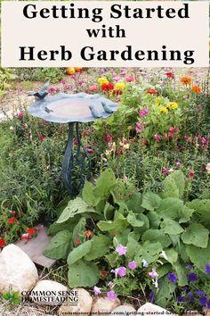 Getting Started Herb Gardening