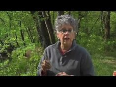 Southern Appalachian Herbs with Patricia Kyritsi Howell - Yellow Root, T...