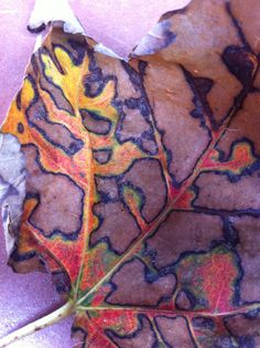 a leaf in my yard, September 2010