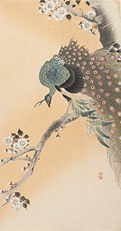 "Japanese Art Print ""Peacock on Flowering Cherry Tree"" by Ohara Koson. Shin Hanga and Art Reproductions http://www.amazon.com/dp/B016WF20W2/ref=cm_sw_r_pi_dp_jTxswb19SNM1Q"