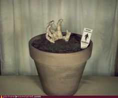 Zombie Hand Pot -- I would put this out at Halloween... or maybe all year??