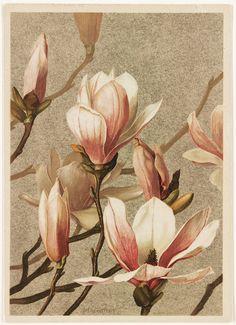 Magnolia | File name: 07_11_000437 Title: Magnolia Creator/C… | Flickr