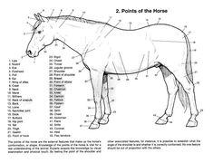 17 best horse color chart images on pinterest horse breeds rh pinterest com