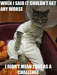 Funny Cat Pictures With Captions | Funny Cat Pictures with Captions 45 (hhahahahhahhahha poor cats, click on the pic, theres some more weird/funny ones haha)