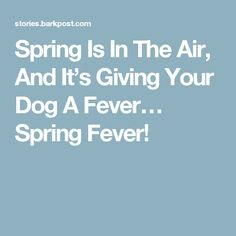 Spring Is In The Air, And It's Giving Your Dog A Fever… Spring Fever!