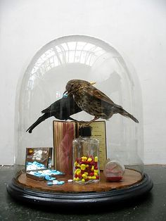 Murdocks commission by Polly Morgan, Fine Art Taxidermy, via Flickr