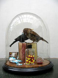 Murdocks commission by Polly Morgan, Fine Art Taxidermy, via Flickr