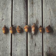 Autumnal Equinox // Mabon #Acorn: strength, money, health, protection. Sleep…
