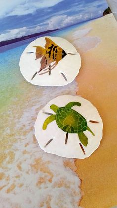 Sand dollar magnets beach decor with sea turtle by beachseacrafts