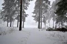 Дорога через зимний лес
