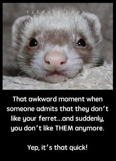 awkward moment when someone admits that they don't like your ferret.and suddenly, you don't like THEM anymore. Yep it's that quick! Baby Ferrets, Funny Ferrets, Pet Ferret, Baby Animals, Funny Animals, Cute Animals, Animals And Pets, Exotic Animals, Exotic Pets