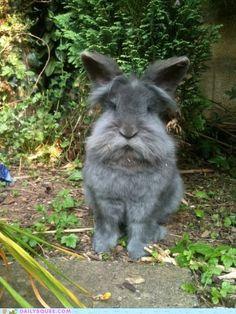 Old Man Rabbit looks grumpy