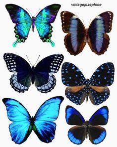 papillons à imprimer vintage joséphine (plein d'autres !)